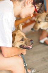 Terapie cu animale - Câini pentru oameni