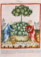 HILDEGARD VAN BINGEN - Tratamente pentru reumatism şi gută (I)