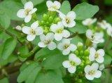 Farmacia verii - Comprese şi cataplasme cu plante verzi