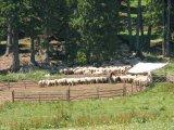 Raiul ciobanilor