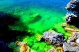 CHLORELLA - Sănătatea are culoarea verde