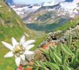 Leacuri din Alpi