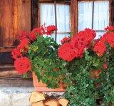 Medicamente din flori