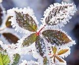 Top 5 al plantelor  care ridică imunitatea (II) - MUŞEŢELUL şi TEIUL