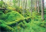 MAGOR CSIBI World Wild Found (WWF) -