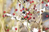 Vitamina C şi sfârşitul de iarnă