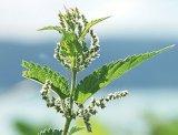 Remedii naturale de dezintoxicare