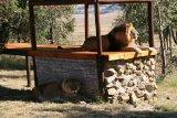 Cezar, leul din Tecuci