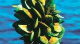 Medicamentul din adâncul mărilor: LYPRINOL