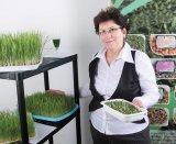Lăstarii de plante şi seminţele germinate