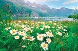 Leacuri cu florile verii: BUJORUL, MARGARETA şi MACUL