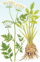 Sănătate cu frunze verzi