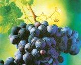 Remedii în reluare: TESCOVINA