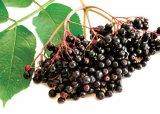 Cele mai cunoscute terapii naturiste contra bolilor toamnei