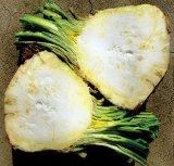 Acidul clorogenic - inamicul obezităţii