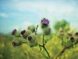 Din reţetele domnului farmacist Bobaru: Preparate din rădăcini de plante