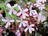 Din reţetele domnului farmacist Bobaru: Preparate din rădăcini de plante (II)