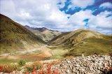 Ciuperca tibetană - inamicul nr. 1 al cancerului