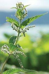 Detoxifiere de primăvară în 6 litere: S-A-L-A-T-Ă
