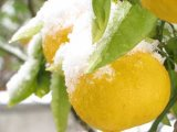 Dieta cu păpădie, ceai verde şi grepfruit