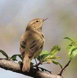 Ce mai fac păsările din Bucureşti?