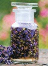 Din reţetele domnului farmacist Bobaru: Levănţica (Lavandula officinalis)