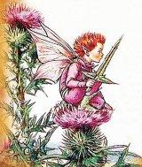 Plante medicinale uitate - CIULINUL