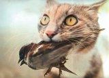 O bestie adorată: PISICA