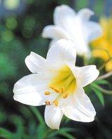 Sănătate din grădina cu flori