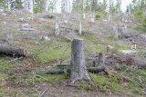 Apocalipsa pădurilor româneşti - MUNŢII APUSENI - BLESTEMUL AURULUI VERDE -