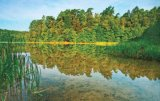 Medicamentele verii: Câmpul, pajiştea şi pădurea