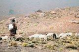 Păstorii din Munţii Atlas