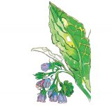 Opt plante acceptate de medicina oficială