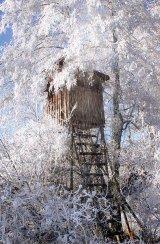 Poveşti din pădurea de argint