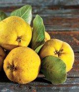 Din reţetele domnului farmacist Bobaru: Fructele iernii - GUTUILE (Cydonia oblonga)