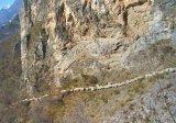 Urme vlăheşti în Provence - Ciobanii din sudul Franţei