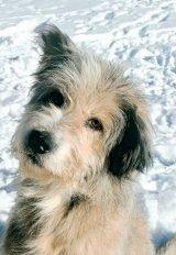 Un câine cu suflet de om: Bercu