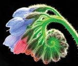 O plantă miraculoasă - TĂTĂNEASA (Symphytum officinale). Din reţetele domnului farmacist Bobaru