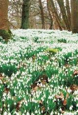 Din reţetele domnului farmacist Bobaru: Florile primăverii