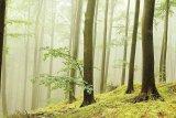 Sănătate cu aer de munte