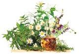 DEPRESIA - Remedii cu alimente