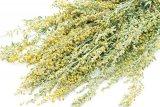 Din reţetele domnului farmacist Bobaru: PELINUL (Artemisia absinthium)