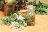 Din reţetele domnului farmacist Bobaru: COADA-ŞORICELULUI (Achillea millefolium)