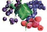 Fructe proaspete şi apă rece