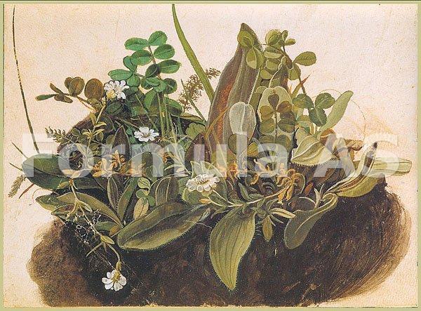 planta care topeste chisturile