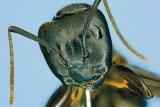 Fabuloasa lume a insectelor: Enigmaticele furnici