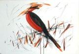 Povestea Păsării ascunse
