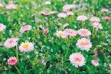 Doctorii primăverii: CAPTALANUL, PODBALUL şi PĂRĂLUŢELE
