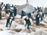 Un român în Antarctica - GABRIEL BRĂNESCU