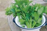 Puterea verdelui: Frunzele de leuştean (Levisticum officinale)